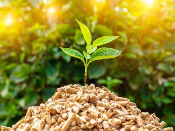 Biomassekraftwerke umaag energie
